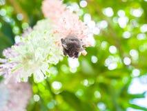 Free Baby Bat Stock Images - 56521834