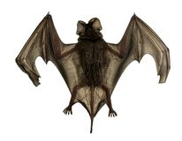 Baby bat Spread wings are flying