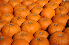 Baby Bear Pumpkins Royalty Free Stock Photo