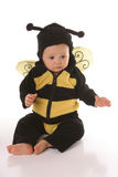 Baby bee sitting Royalty Free Stock Image
