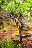 Baby beech tree with selective focus Stock Photo
