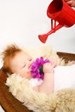 Baby being nurtured to grow. A view of a baby boy lying in a basket, grasping a large purple flower while a red watering can is held over him.  Metaphorical Royalty Free Stock Photo