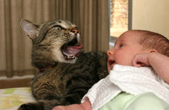 Baby being watched by cat Royalty Free Stock Photos
