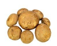 Baby Bella mushrooms Royalty Free Stock Images