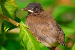 Baby bird stock image