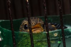 Baby bird in cage. Closeup shot of baby bird in cage stock images