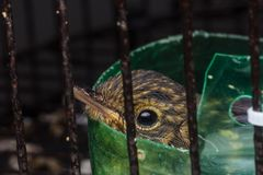 Baby bird in cage. Closeup shot of baby bird in cage stock photo