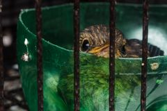 Baby bird in cage. Closeup shot of baby bird in cage stock image