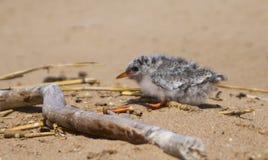 Pretty baby bird Stock Images