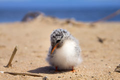 Pretty baby bird Royalty Free Stock Photo
