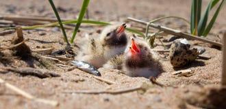Pretty baby bird Royalty Free Stock Image