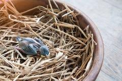 Baby bird died on bird nest. Baby bird died on nest Royalty Free Stock Photo