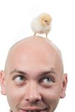 Baby bird on head Stock Photos