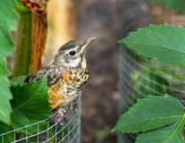 Baby bird hiding in garden, Royalty Free Stock Photo