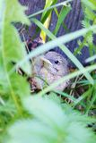 Baby bird. A litle bird is fell out of the nest and hidding now Stock Images