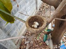 Baby bird and nest. On tree Stock Photo