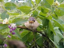 Baby bird. Real picture click with mobile stock images