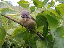 Baby bird. Real picture click with mobile royalty free stock images