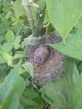 Baby bird. Real picture click with mobile royalty free stock image