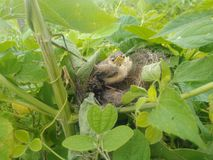 Baby bird. Real picture click with mobile stock photo