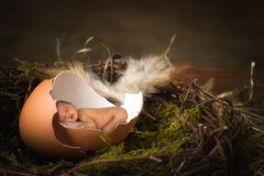 Baby in birds nest. Tiny african baby sleeping in a broken egg royalty free stock photography