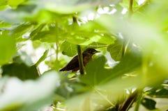 Baby Bird on Tree Royalty Free Stock Image