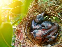The baby bird is waiting for food from the mother in the nest. stock photos