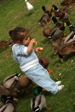 Baby with Birds. Young child with ducks stock photography