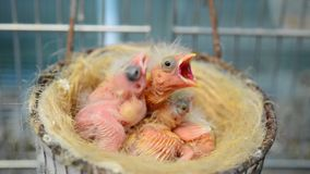 Baby birds Stock Photo