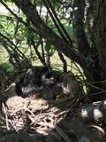 Baby birds stock photo