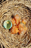 Baby birds by hatched egg stock photos
