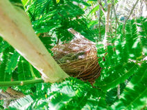 Baby birds in a nest on tree nature Royalty Free Stock Image