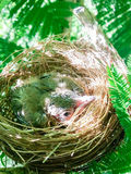 Baby birds in a nest on tree nature Stock Photos