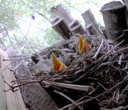 The baby birds stock photography