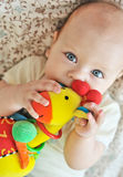 Baby biting a toy Stock Image