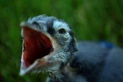Baby-Blau Lizenzfreies Stockfoto