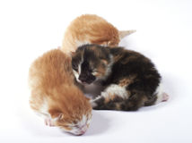 Baby blind kitten lost in a pile Stock Image