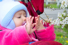 Baby with a blossoming branch Stock Photography