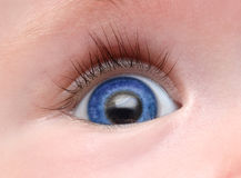 Baby blue eye. With long eyelash close-up royalty free stock images