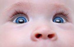 Baby blue eyes. With long eyelash close-up Stock Image