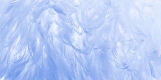 Baby blue feather background royalty free stock images