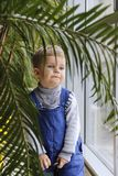Baby in a blue jumpsuit behind a Palm tree near the window. stock photo