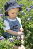 Baby in Bluebonnet2 Royalty Free Stock Photography