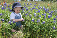 Baby in Bluebonnets. Baby in flowers Royalty Free Stock Image