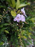 Baby-Blume Stockfotos