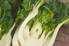 Baby Bok Choy Royalty Free Stock Photography