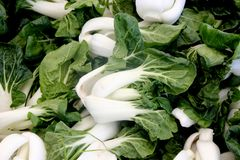 Baby Bok Choy, Brassica rapa subsp chinensis. Popular Asian vegetable with white colored stalks with swollen base and dark green leaves with crinklu texture Royalty Free Stock Photography