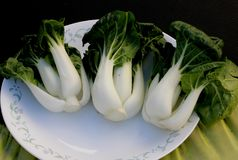 Baby Bok Choy, Brassica rapa subsp chinensis. Popular Asian vegetable with white colored stalks with swollen base and dark green leaves with crinklu texture Stock Images