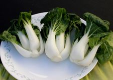 Baby Bok Choy, Brassica rapa subsp chinensis. Popular Asian vegetable with white colored stalks with swollen base and dark green leaves with crinklu texture Stock Image