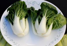 Baby Bok Choy, Brassica rapa subsp chinensis. Popular Asian vegetable with white colored stalks with swollen base and dark green leaves with crinklu texture Stock Photos